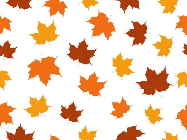 Maple folhas padrão sem emenda isolado no fundo branco vetor