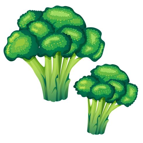 ilustração vetorial de brócolis vetor