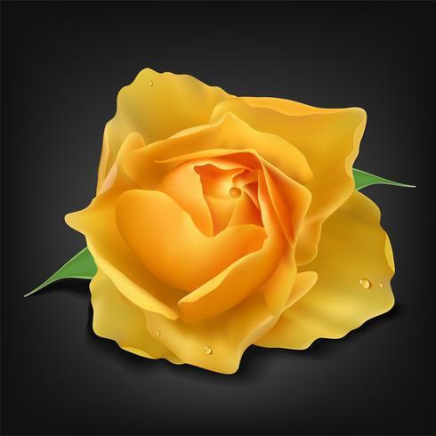 Realista rosa amarela em fundo escuro, ilustração vetorial vetor