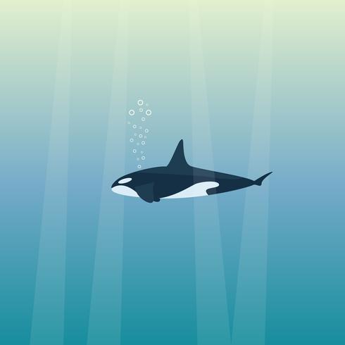 Baleia assassina nadando no oceano azul vetor