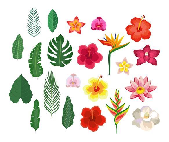 Coleção de flores e folhas tropicais vetor