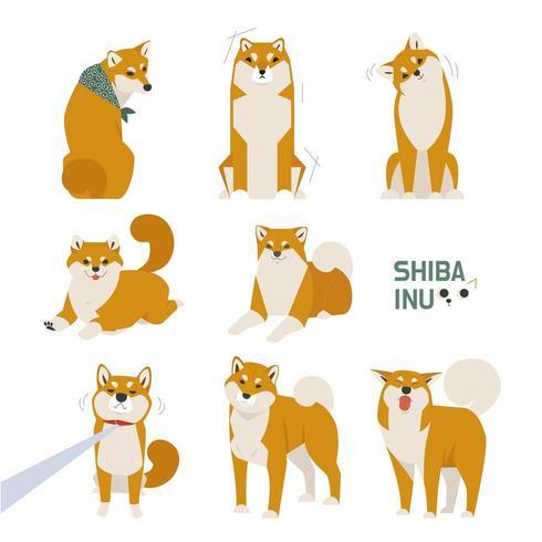 Conjunto bonito Shiba Inu vetor