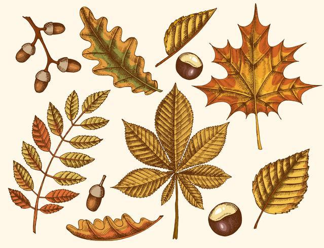 Conjunto de folhas de outono mão desenhada vetor