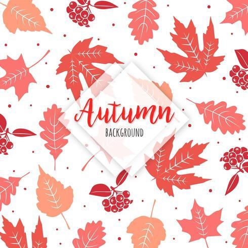 Lindas folhas coloridas de outono vetor