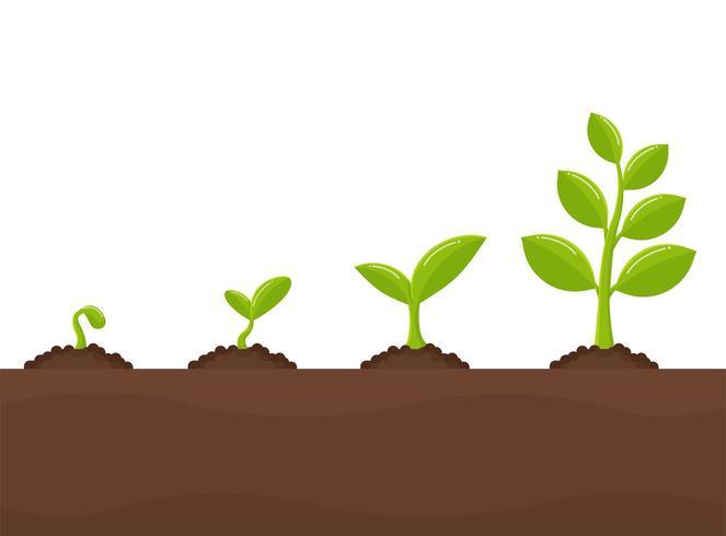 Crescimento de árvores Plantando árvores que brotam de sementes vetor