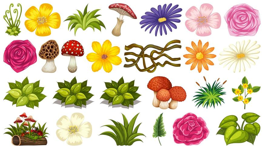 Conjunto de plantas ornamentais vetor