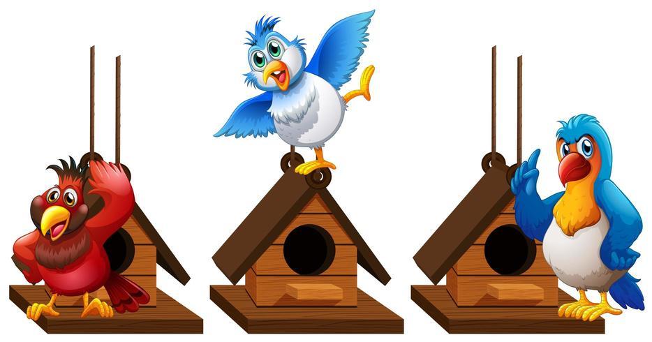 Três pássaros papagaio arara na casa de passarinho vetor