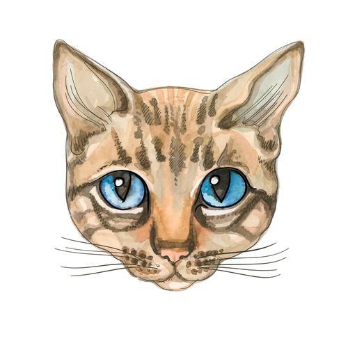 Cara de Gato. Aquarela. Ilustração vetorial Gato puro-sangue. vetor