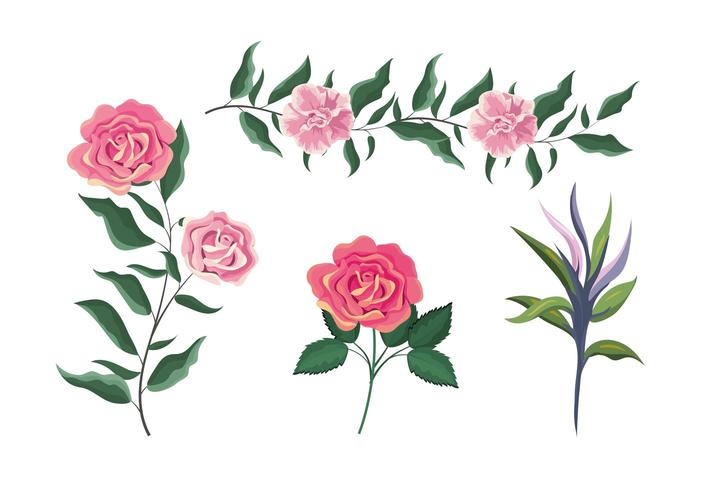 conjunto de plantas de rosas exóticas com folhas vetor