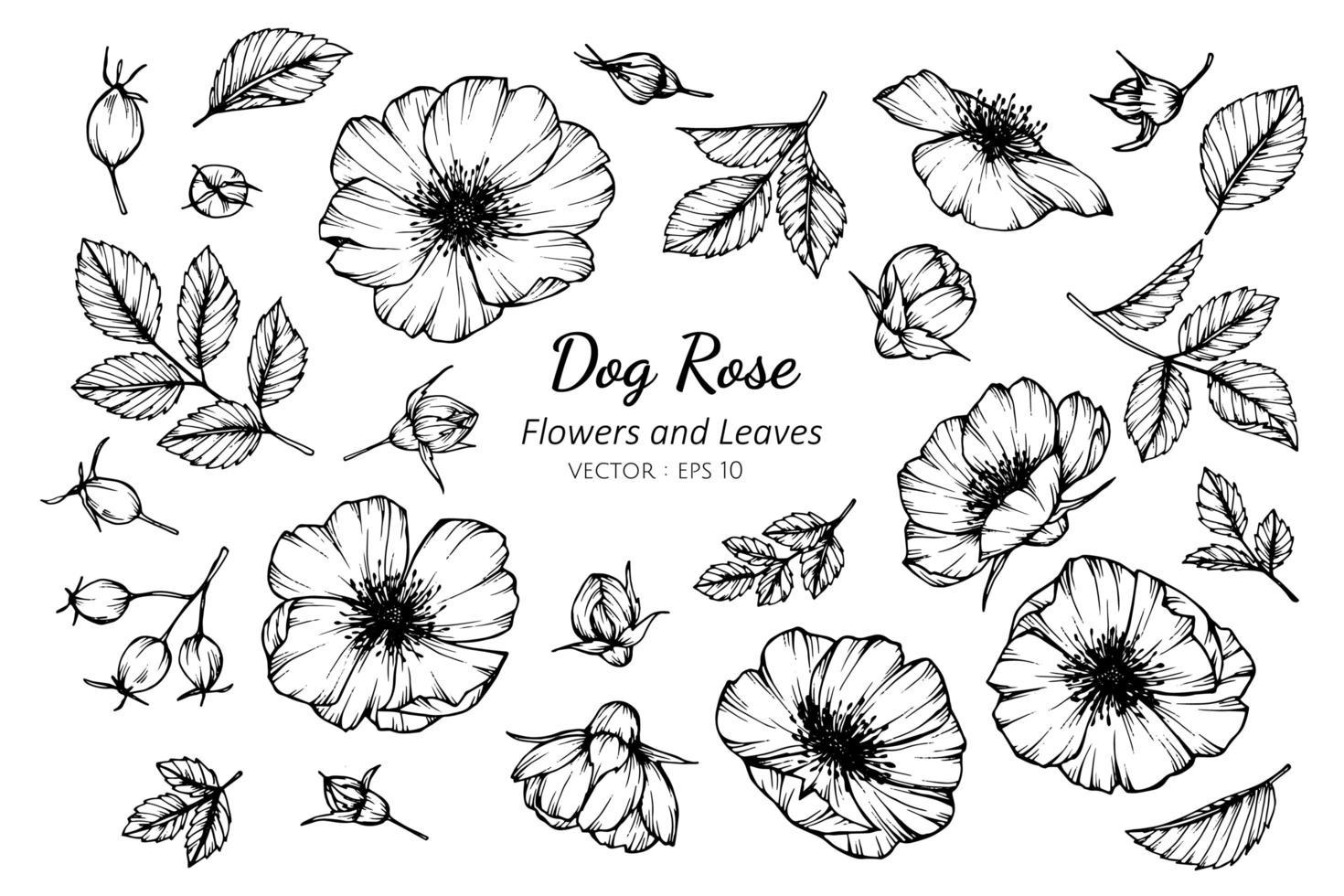 coleção de cachorro rosa flores e folhas vetor