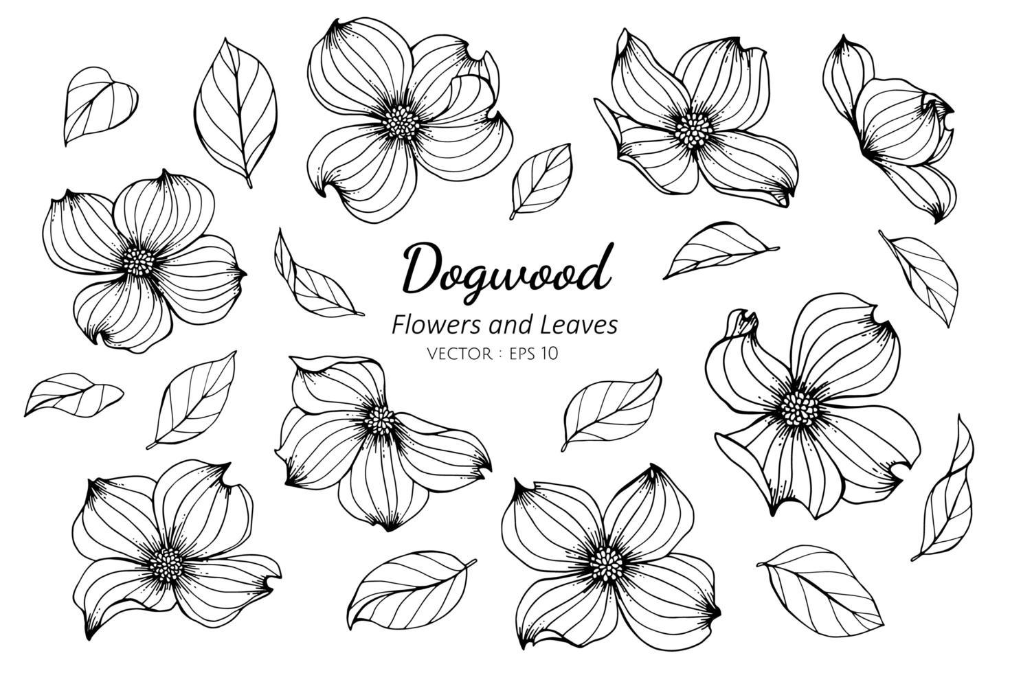 coleção de flores e folhas de dogwood vetor
