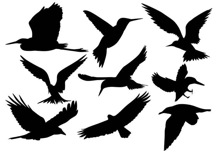 Vetores da silhueta do pássaro voador