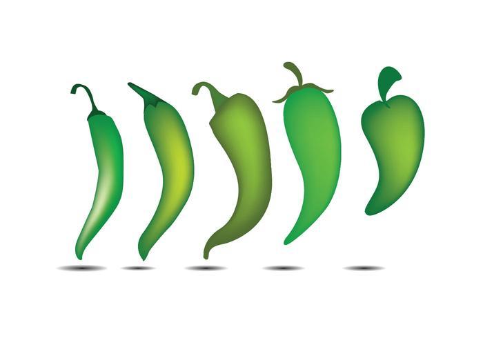 Pimenta verde vetor