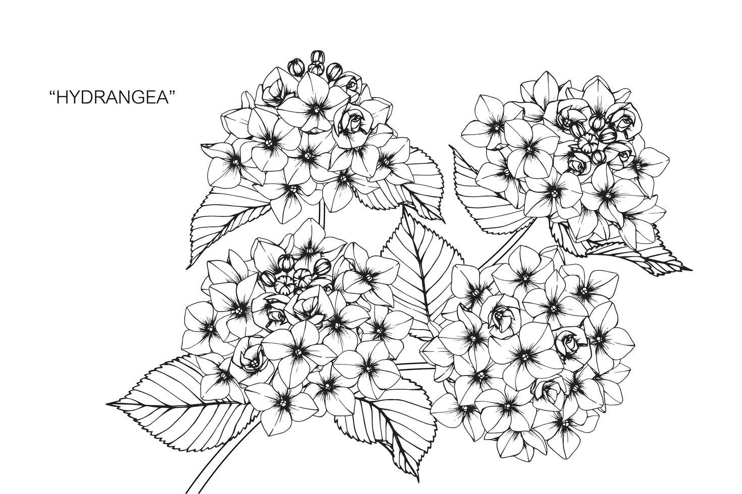 mão desenhada hortênsia flor e folha design vetor