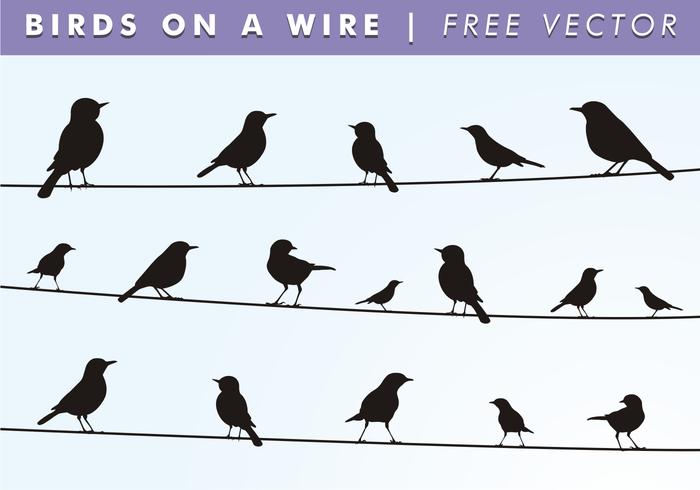 Pássaros em um vetor livre de fios