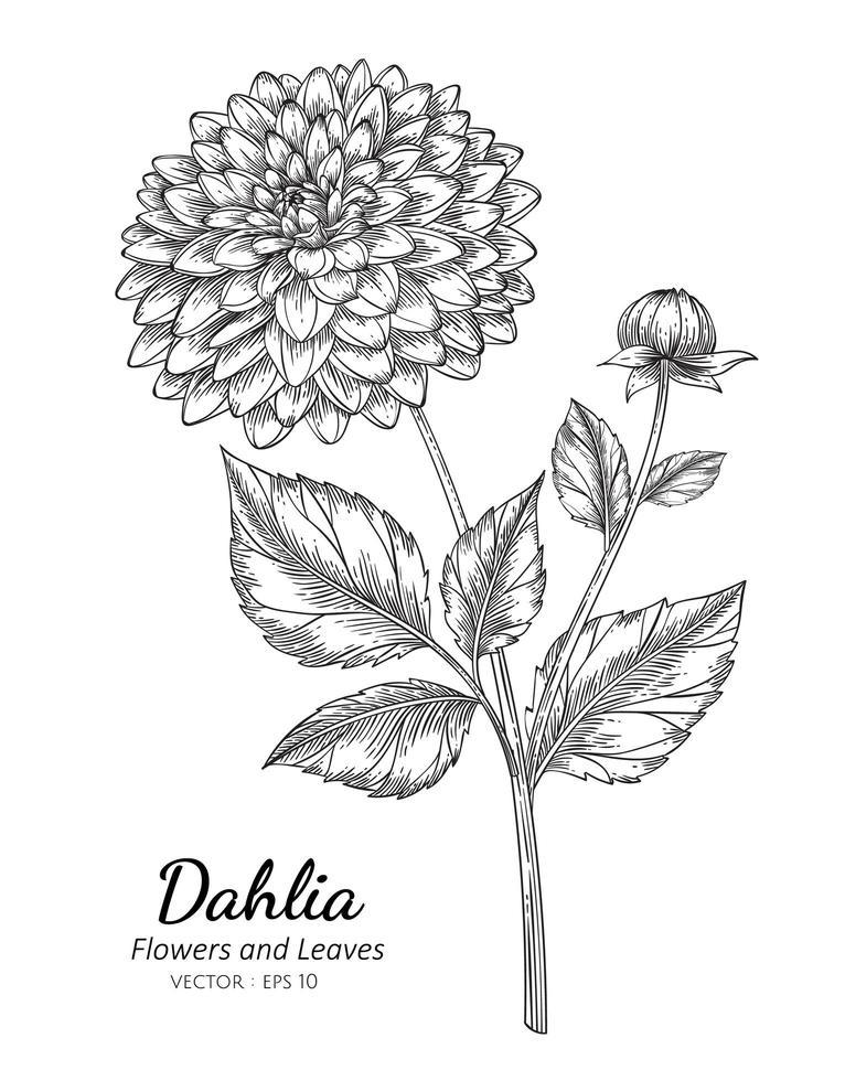 dália flor e botânico vetor