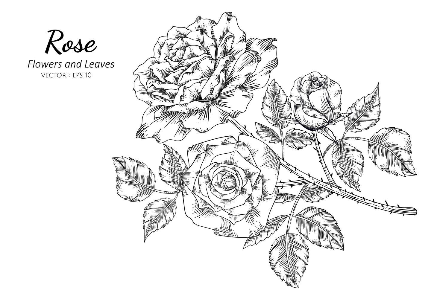 folhas e flor rosa vetor