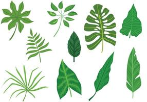 Vetores de folhas tropicais livres