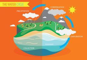 Vector do Diagrama do Ciclo da Água