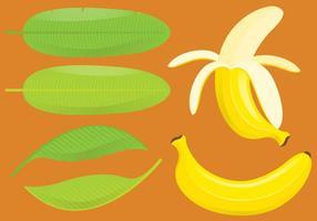 Bananas e folhas vetor