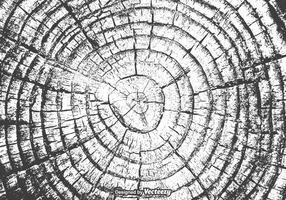 Textura livre do vetor dos anéis de árvore