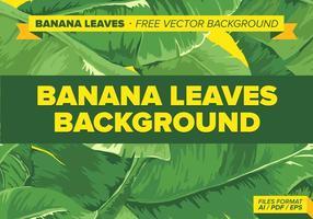 Banana deixa o fundo do vetor grátis