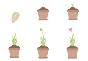Vector livre do ciclo de vida da planta