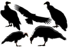 Condor Silhouette vetor