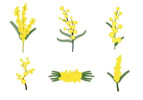 Vector de flores de Mimosa grátis