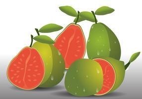 Fruta fresca de goiaba vetor