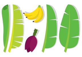 Folha de banana e frutas