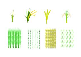 Vector de campo de arroz grátis