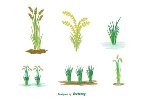 Vector de planta de arroz grátis