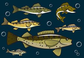 Vetor de peixes de Walleye grátis