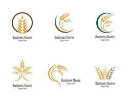 conjunto de logotipo de trigo e grão de agricultura