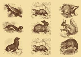 Vetores de mamífero de desenho de estilo antigo