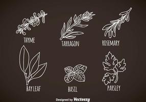Vetores de folhas de ervas e especiarias