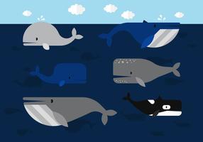 Baleia vetor
