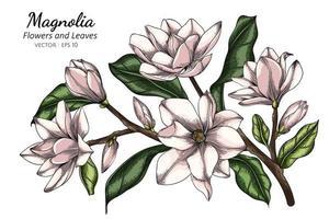 Magnólia branca flores e folhas de desenho