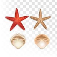 elemento de verão estrela do mar e marisco vetor