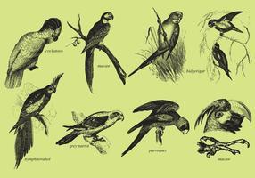 Papagaios e araras vetor
