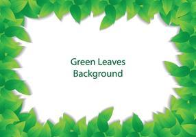 Green leave background vetor