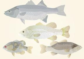 Conjunto de peixes vetor