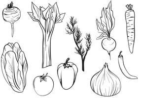 Vetores de vegetais desenhados a mão