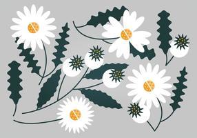 Conjunto floral branco do vetor