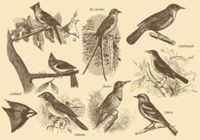 Pequenos desenhos de pássaros vetor