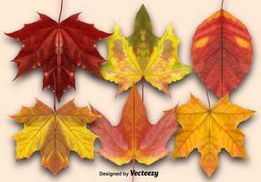 Conjunto De Vetor De Folhas De Outono
