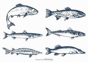 Conjunto de peixes de água doce de vetores grátis