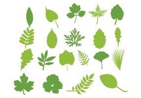 Conjunto de folhas folha de vetores