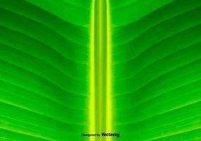 Fundo verde da folha - vetor
